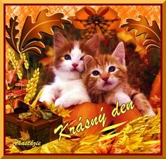 Krásný den. Kittens Cutest, Cats And Kittens, Friends Forever, Humor, Animals, Image, Cheer, Animaux, Animal
