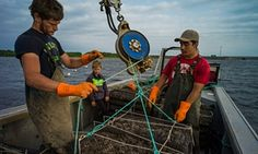 The oyster farmers of Prince Edward Island – in pictures