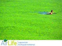 #airlife #aire #previsión #virus #hongos #bacterias #esporas #purificación purificación de aire Airlife te dice. ¿tu sabes que es la eutrofización? La eutrofización es causada por un exceso de nutrientes vegetales en el agua. Que hace que diversas plantas como algas, y lentejas de agua crezcan tanto que bloqueen la luz , debido  a esto el ecosistema se ve afectado sus principales detonantes son…