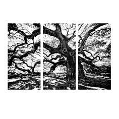 'Oak' by Bruce Bain 3 Piece Photographic Printt on Wrapped Canvas Set