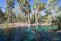 Image result for Bitter Springs at Elsey National Park Darwin, Bitter, National Parks, Travel, Outdoor, Image, Viajes, Outdoors, Destinations