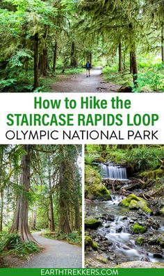 How to hike the Staircase Rapids Loop in Olympic National Park. #olympic #onp #nationalpark