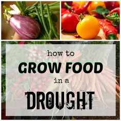 How to grow food in a drought (water the roots, not the ground, provide shade, choose crops wisely, etc.).