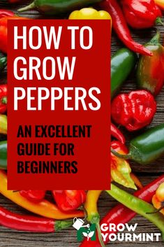 how to grow peppers #garden#gardening#growyourmint.com