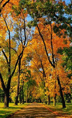 Autumn Alley, Poland | (10 Beautiful Photos)