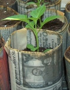 Recycled Newspaper Pots: very cool indeed! This is a guide on how to make them!