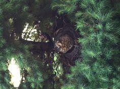 Two birdies flew the coop. One bird left!!                  6-3-13