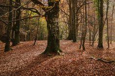 Bosque Urederra