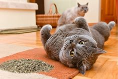Cat Crack Organic Catnip, Premium Blend Safe for Cats, Infused with Maximum Potency Your Kitty is Sure to Go Crazy for Cheap Pet Insurance, Cat Insurance, Health Insurance, Feline Leukemia, Kitten Care, Pets 3, Cat Treats, Animal Shelter, Pet Shelter