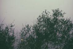 #photography #art #landscape #contemporary #fotografie #kunst #personal #journal #artist #image-maker #still life #extraordinary #work #Landschaftsbilder #fotograf #broken glass #black wall #scratches #window #window shield #grasses #leaves #sea #rain