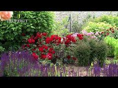 Apprenez pas à pas à bien planter un rosier en pot ou en pleine terre. Retrouvez les bons gestes à effectuer grâce à nos conseils et vidéos. Planter Rosier, Comment Planter, Planters, Urban, Tv, Collection, Artificial Flowers And Plants, Mediterranean Plants, Urban Gardening