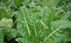 Qué plantas mejoran tu estado de ánimo - Notas - La Bioguía