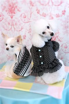 Fifi & Romeo. Modeled by Momo & Chilly. Love her polka dots!  #dog…