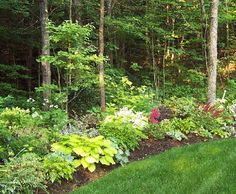 Woodland edge garden design. Like the distinct separation between grass and wood.
