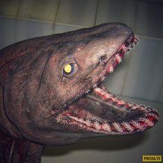 Пользователь твиттера Роман Федорцов  работающий на рыболовецком траулере, выкладывает в свой микроблог фотографии необычных рыб, попадающих в сети. В его коллекции десятки различных снимков из разных частей света. Мы сделали подборку пожалуй лучших его снимков.