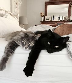 and pets newspaper, pets and qatar living accommodation in wakra, and pets ealing comedies sim, animals and pets qartulad kinoebi ji qartulad. Cute Cats And Kittens, I Love Cats, Crazy Cats, Cool Cats, Animals And Pets, Baby Animals, Cute Animals, Animals Images, Pretty Cats