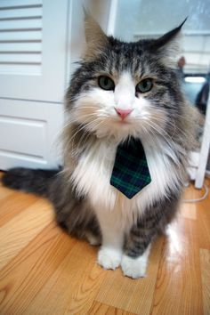 Can you stand this picture! Too CUTE! Pet Dog Cat Collar ACCESSORY Necktie by fingerstory on Etsy, $10.00