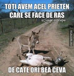 This little Iih-Aahs here. True Stories, Funny Memes, Horses, Humor, Guys, Face, Pictures, Animals, Donkeys