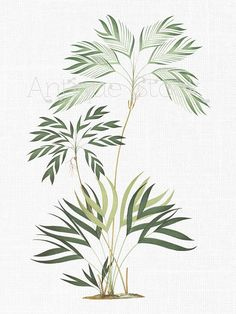Plant Clipart 'Tropical Palms' Botanical Illustration Digital Download Art Image for Invitations, Crafts, Collages, Wall Art...