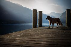 morning mood by anne_geier All Types Of Dogs, Morning Mood, Les Oeuvres, Explore, Mountains, Travel, Animals, Facebook, Portraits