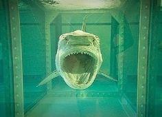 富豪花了800萬美元收藏鯊魚屍體,結果翻了好幾倍!?!