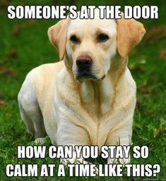 This must be what Rosie thinks...every door bell is like a signal the world is ending.