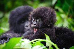 A mother and baby gorilla sitting in the jungle.