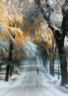 Frost boulevard (no location given) by Paolo Fefe'