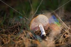 stock photo of mushrooms in the autumn forest close up