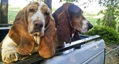 My Norma Jean and Hattie Mae - look at that big ole paw!