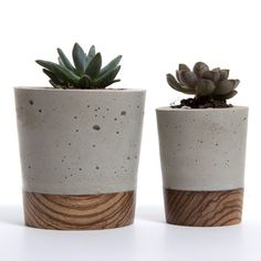 Mini Concrete Planter - Zebra Wood Base by Wasatch Creative - BelivinDesign