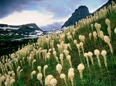 National Geographic Guide to Glacier National Park