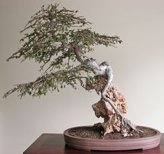 The Bonsai of Lindsay Bebb