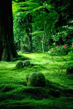 Moss garden, Sanzen-in Temple, Kyoto, Japan 京都 日本 三千院