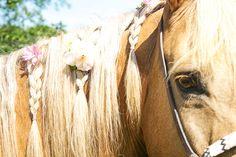 Equestrian Photo Shoot | Horses & Heels