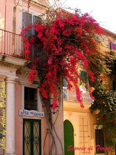 Scorcio di Tropea, province of Vibo Valentia, Calabria, Italy
