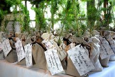 tree saplings wrapped in berlap as a gift/table assignment