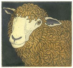 Goldie, the ewe