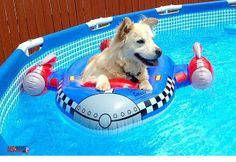 Dump A Day Funny Pictures Of The Day - 96 Pics. This dog hates to swim but loves his floaty Funny Shit, Funny Cute, Funny Humor, Funny Ads, Hilarious Stuff, Videos Funny, Cute Animal Pictures, Puppy Pictures, Like Animals
