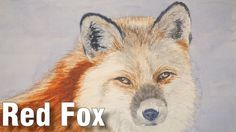 How to Paint a Red Fox Portrait in Watercolour