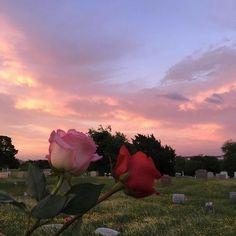 Roses with sunset