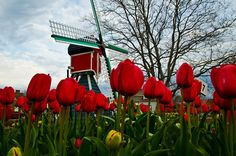 Holland by topmedic, via Flickr