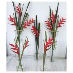 Flor natural en casa #heliconias #natural #flower
