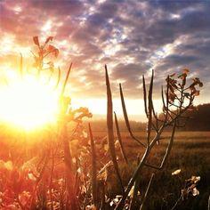 Sunday sunrise, ready to Moscow, 2nd round, we love it. #moscow #sunrise #sunday #sun #summer #landscape #steppe#sky @kjoreproject