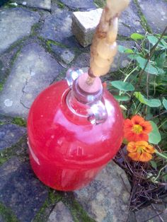 Ben's Adventures in Wine Making: Crab Apple & Strawberry Wine 2014 - The Making Of ...