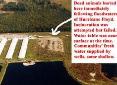 Hurricane Floyd dumps massive waste into Neuse River