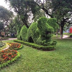 Just worked out the hedge is trimmed to look like a dragon. Walked past this10 times before we noticed. #Hanoi #Vietnam #upsticksngo #travel #photoopportunity #picoftheday