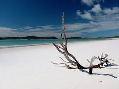 Driftwood on Whitehaven Beach, Whitsunday Island, Australia