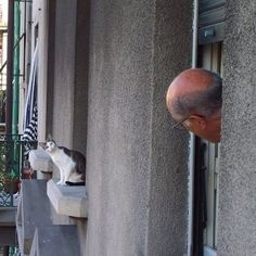 SkunkWire brings you cute and funny animal pictures every day. We got funny cats and cute dogs, plus lots of other funny animal pictures Cute Cats, Funny Cats, Funny Animals, Cute Animals, Funniest Animals, Crazy Cat Lady, Crazy Cats, Animal Pictures, Funny Pictures