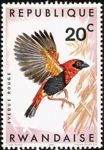 Red Bishop (Euplectes orix ssp. nigrifrons)